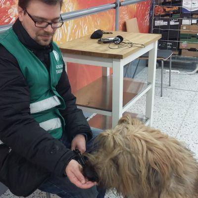 Thomas Grönberg skolar stödhunden Max till epilepsihund