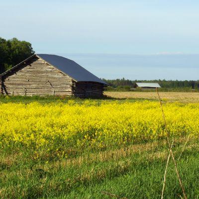 Harmaa lato keltaisten kukkien keskellä
