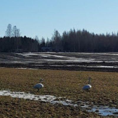 Jälän kylän laajalla peltoaukealla on hyvä bongata muuttolintuja.