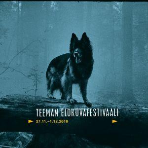 Koira metsässä kaatuneen, lahon puunrungon päällä. Teeman elokuvafestivaalin 2019 -profiilikuva
