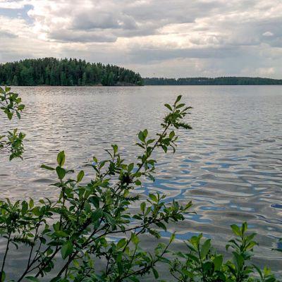 Viinijärvi ja Suuri-Myhkyrän saari.