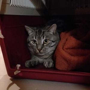 Katten Hariton gömmer sig i sin bur