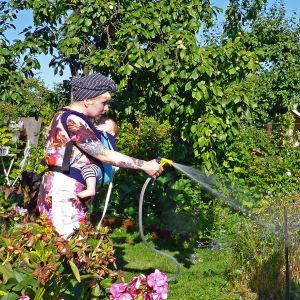 Nainen suihkuttaa puutarhaletkulla vauva kantorepussa.