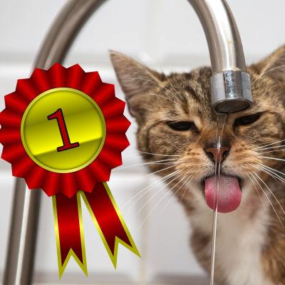 En katt som dricker vatten ur en kran. Ser lite arg och uttråkad ut.
