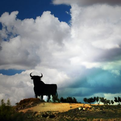 Härkä tienvarressa Espanjassa