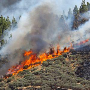 En markbrand som härjar i ett skogsområde.