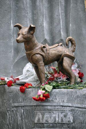 Staty av hunden Lajka. Statyn finns i Moskva.