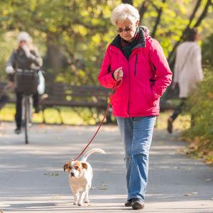 En äldre kvinna går i en park med en hund. I bakgrunden syns en person cykla.