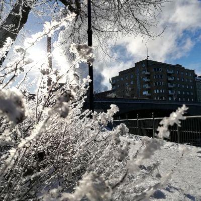 Aurinkoinen ja talvinen päivä