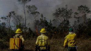 Tre brandmän står i gula kläder vid en skogskant i Amazonas som är täckt av rök.