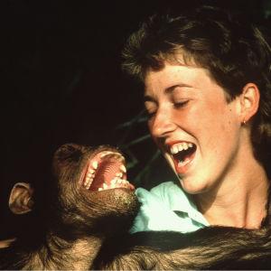 Simpanssi ja nainen irvistävät iloisesti, apinan käsi naisen niskassa