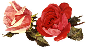 Kuvassa kaksi punaista ruusua piirrettynä