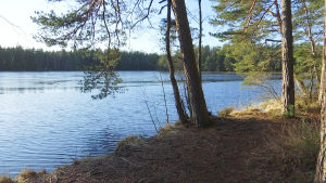 Några träd står invid ett träsk med blått vatten. Solen lyser.