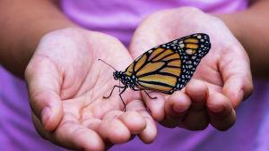 kuvassa suuri perhonen on naisen ojennetuissa käsissä