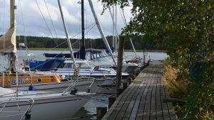 Flera småbåtar vid en brygga. I bakgrunden syns vatten.
