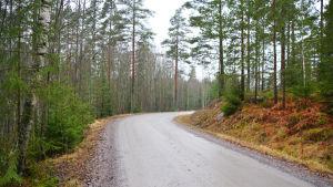 En högerkurva på en lerig sandväg. På båda sidor om vägen gran- och tallskog.