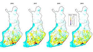 På bilden syns fyra kartor över Finland från år 2016 till 2019. På kartorna har man med olika färger märkt ut var det finns vildsvin, och hur många de är.