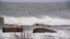 Stora vågor slår mot stora stenar. Bakom vågorna syns en man i våtdräkt som ligger på en surfbräda i havet.