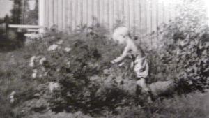 svartvitt fotografi på en ung pojke som rör vid en blombuske, Hans Wikström som ung