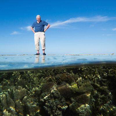 David Attenborough tutustuttaa kolmiosaisessa sarjassa Australian suuren valliriutan syntyyn, nykypäivään ja tulevaisuuteen.