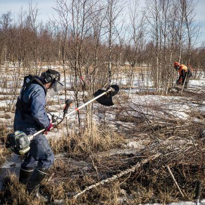 Miehet harventavat puita että Kempeleenlahti näkyisi