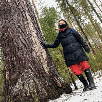 Oulunsalon Varjakan männyn luona kasvi- ja maaperäekologian dosentti Annamari Markkola Oulun yliopistolta