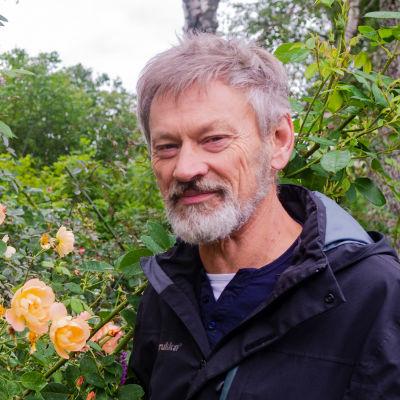 En äldre, skäggig man står bredvid ett rosenbuskage.