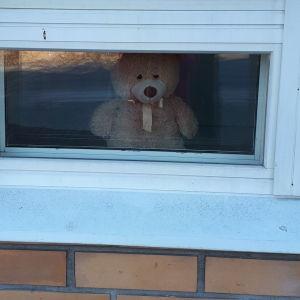 Nalle i ett fönster på Brändövägen i Vasa.