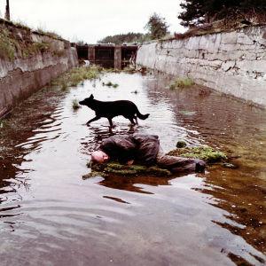 Mies makaa mättäällä veden keskellä, musta koira vartioi. Kuva elokuvasta Stalker.