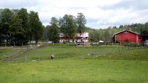Jouko Tarvaisen hevossauna sijaitsee Tarvaalassa Saarijärvellä.