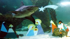 Vedenalainen seimi Madridin Aquariumissa.