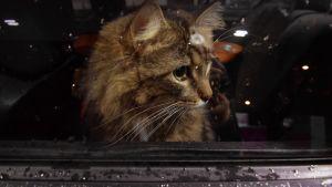 en katt i ett fönster