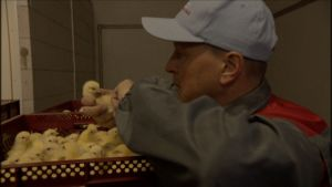 Petri Yli-Soini är kycklinguppfödare och hälsovårdsveterinär i Nurmo.
