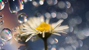 Saippuakuplia ja kukka
