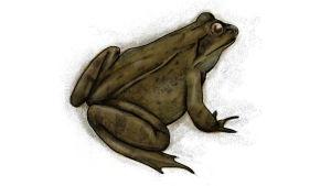 piirroskuva sammakko