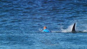 Surfaren Mick Fanning antastas av en haj mitt under tävling.