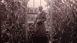 Aino Sibelius vid sin trädgårdsodling på Ainola
