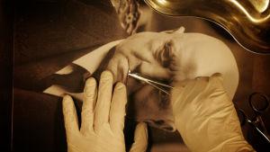 Kurkun leikkausta sehän on sibelius -sarjassa