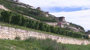 Företagets hemort Freyburg ligger i vinodlingsområdet Saale-Unstrut.