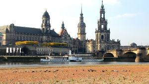 Stadsvy över Dresden