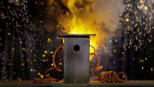 Räjähtävä linnunpönttö
