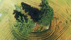 Vetefält från ovan