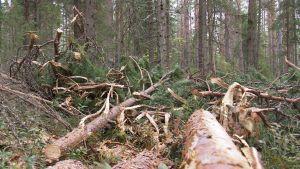 Oksia ja puunrunkoja metsässä.