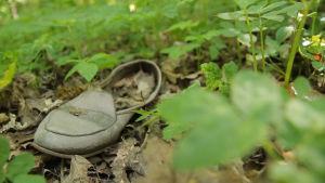 Mikroskooppista muoviroskaa on kohta lautasellasi. Tshernobyl, Fukushima. Mitä tapahtuisi, jos ihmiset katoaisivat Helsingistä? Tutkijoille tulvii tuhansittain punkkeja.