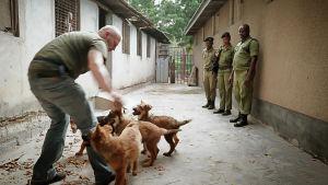 Seitsemänosainen Norsunluukoira-sarja on tarina unelmasta, eläinten oikeuksista ja kulttuurien yhteentörmäyksestä.