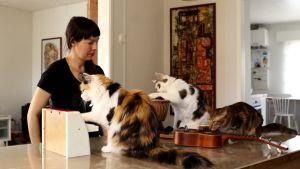 Kuvassa kolme kissaa soittaa omistajansa Elina Väyrysen johdolla