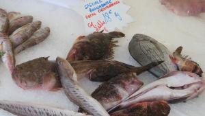 Nizzalaisen kalakaupan tiskillä valmis valikoima kaloja bouillabaisse-keittoon.
