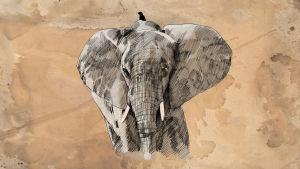norsu ja lintu, piirustus