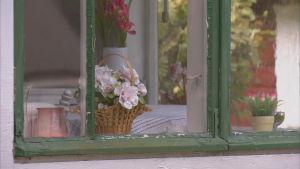 fönster med blomma i