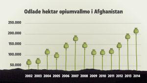 Odling av opiumvallmo i Afghanistan, diagram